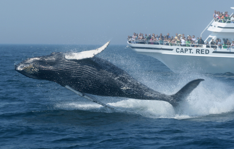 The Whale Watching Tour
